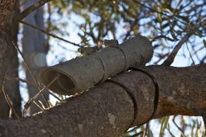 Pygmy Possum Tube 8