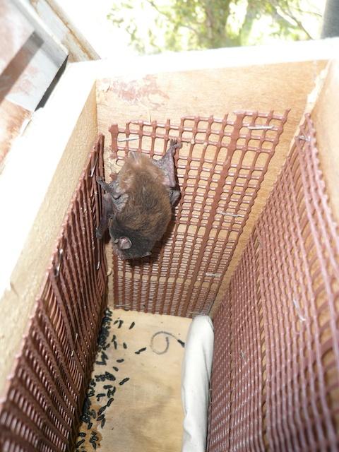 Diy bat box nestboxes for Bat box obi